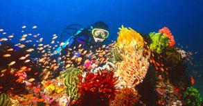 Marco Vincent Dive Resort Yacht reef